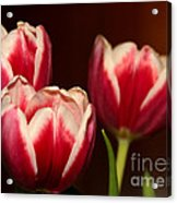 Three Red Tulips Acrylic Print