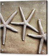 Three Starfish Acrylic Print