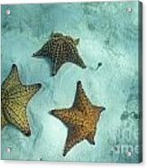 Three Starfishes On Sandy Seabed Acrylic Print by Sami Sarkis
