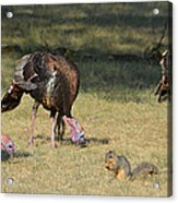 Three Toms And A Squirrel Acrylic Print