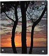 Three Trees At Sunset  Acrylic Print