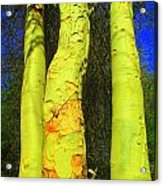 Three Trees Acrylic Print