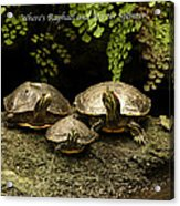 Three Turtles Acrylic Print