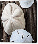 Three Types Of Sand Dollars Acrylic Print by Garry Gay
