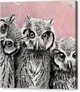 Three Wise Owls Acrylic Print