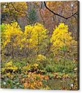 Three Yellow Trees Acrylic Print