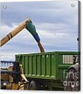 Threshing The Barley Acrylic Print