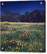 Through The Blooming Fields Acrylic Print