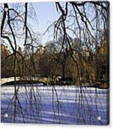 Through The Branches 1 - Central Park - Nyc Acrylic Print