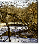 Through The Branches 2 - Central Park - Nyc Acrylic Print