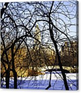 Through The Branches 3 - Central Park - Nyc Acrylic Print