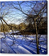 Through The Branches 4 - Central Park - Nyc Acrylic Print