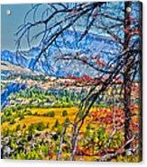 Through The Branches Acrylic Print