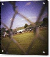 Through The Fence Neo Acrylic Print