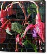 Through The Glass . Texture Acrylic Print