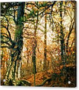 Through The Island Forest Acrylic Print