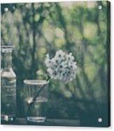 Through The Open Window Acrylic Print
