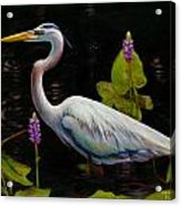 Through The Pickerelweed Acrylic Print