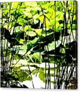 Through The Reeds Acrylic Print