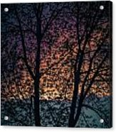 Through The Tree Acrylic Print