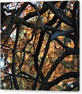 Through The Trees 2 Acrylic Print