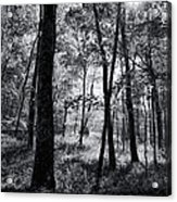 Through The Trees In Black And White Acrylic Print