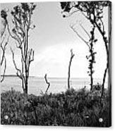 Through The Trees Acrylic Print by Thomas Leon