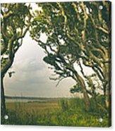 Through The Twisty Trees Acrylic Print
