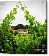 Through The Vines Acrylic Print by Lainie Wrightson