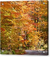Through The Woods By D. Perry Lawrence Acrylic Print