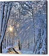 Through The Woods Acrylic Print