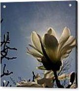 Thru The Flowers 2 Acrylic Print