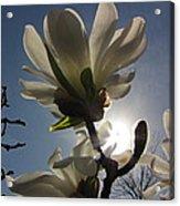 Thru The Flowers Acrylic Print