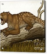Thylacoleo Carnifex, A Marsupial Acrylic Print