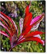 Red Ti Plant Acrylic Print