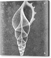 Tibia Sea Shell X-ray Art Acrylic Print
