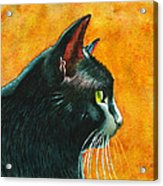 Black Cat In Profile Acrylic Print