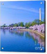 Tidal Basin And Washington Monument With Cherry Blossoms Acrylic Print