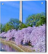 Tidal Basin And Washington Monument With Cherry Blossoms Vertical Acrylic Print