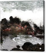 Tide Pool  Acrylic Print
