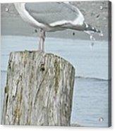 Tide Watcher Acrylic Print