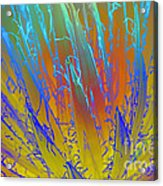 Tie Dye Agave Acrylic Print