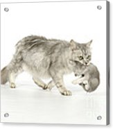 Tiffanie Cat And Kitten Acrylic Print