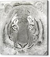 Tiger #1 Acrylic Print