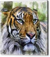 Tiger 26 Acrylic Print