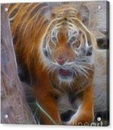 Tiger-5362-fractal Acrylic Print