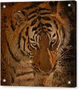 Tiger Art Acrylic Print