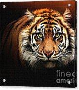 Tiger Bright Acrylic Print