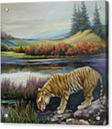 Tiger By The River Acrylic Print