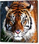 Tiger Close Up Acrylic Print